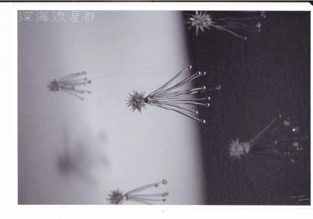 深海流星群