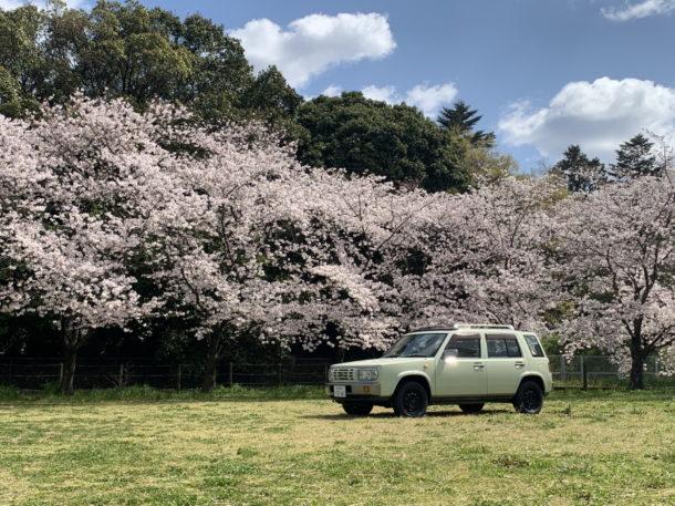 桜とラシーン