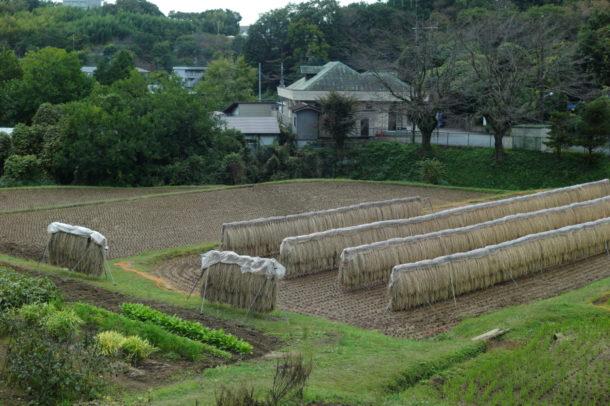町田市の田園